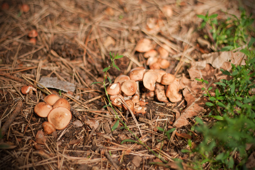 Die Dölauer Heide beherbergt viele Arten an Pflanzen, Tieren und Pilzen und am Wegesrand wird man bereits fündig.