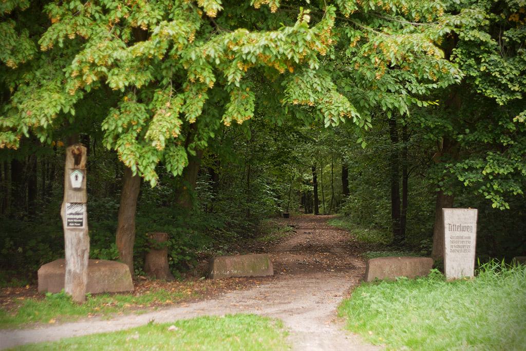 Der Tittelweg führt vom Nordosten in die Dölauer Heide.