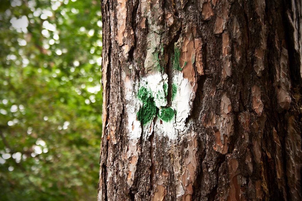 """Das grüne Kreuz kennzeichnet den Wanderweg """"Große Heidetour""""."""