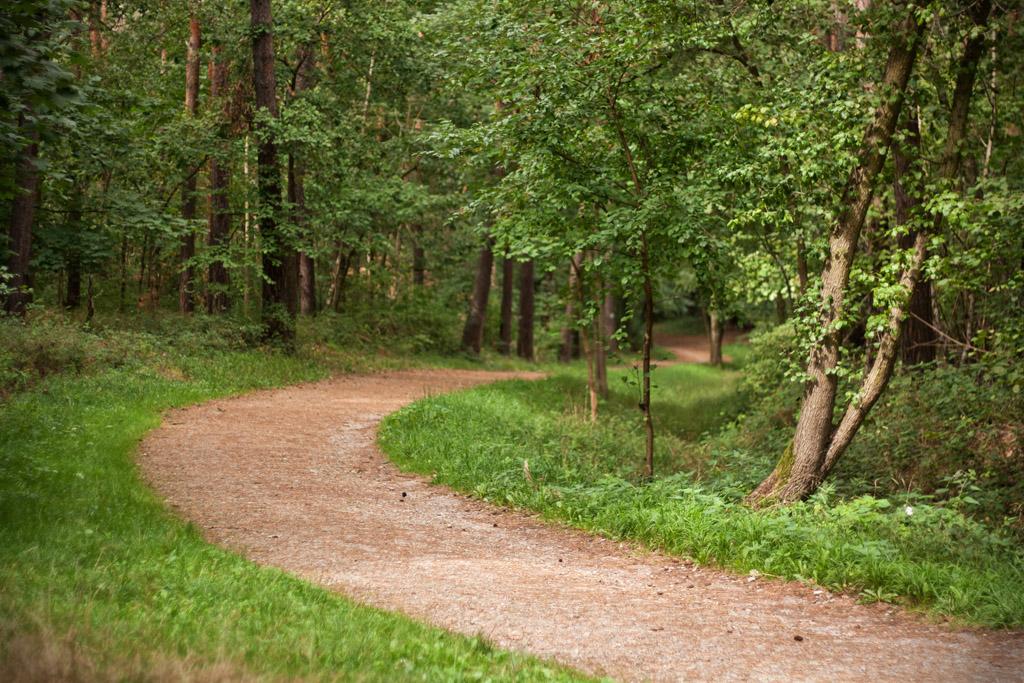 Der Weg schlängelt sich durch die Heide.