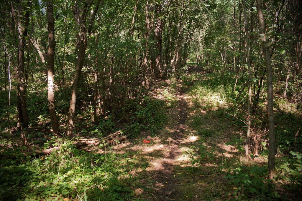 Ein schmaler Trampelpfad führt in das Unterholz bei Burgliebenau.