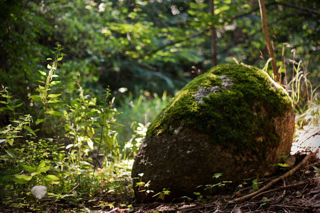 Ein mossüberwachsener Stein. Ob er ein Relikt der versunkenen Burg ist?