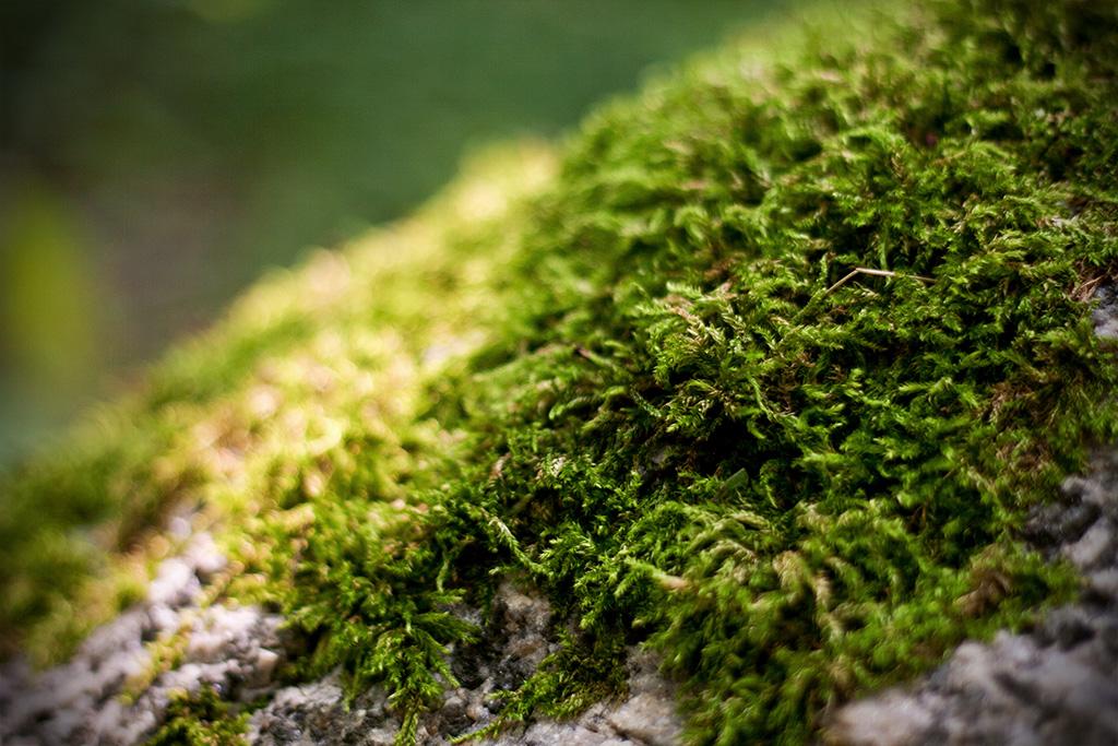 Das Moss breitet sich wie ein dicker weicher Teppich über den Stein aus.