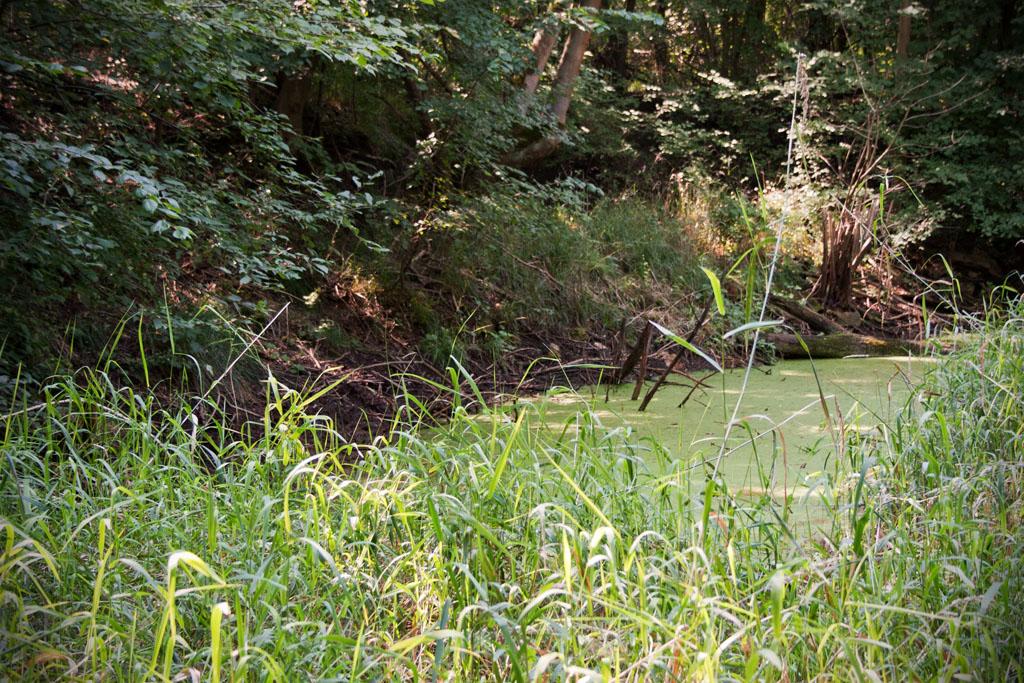 Der kleine Tümpel zeigt, dass der Graben auch manchmal Wasser führt.