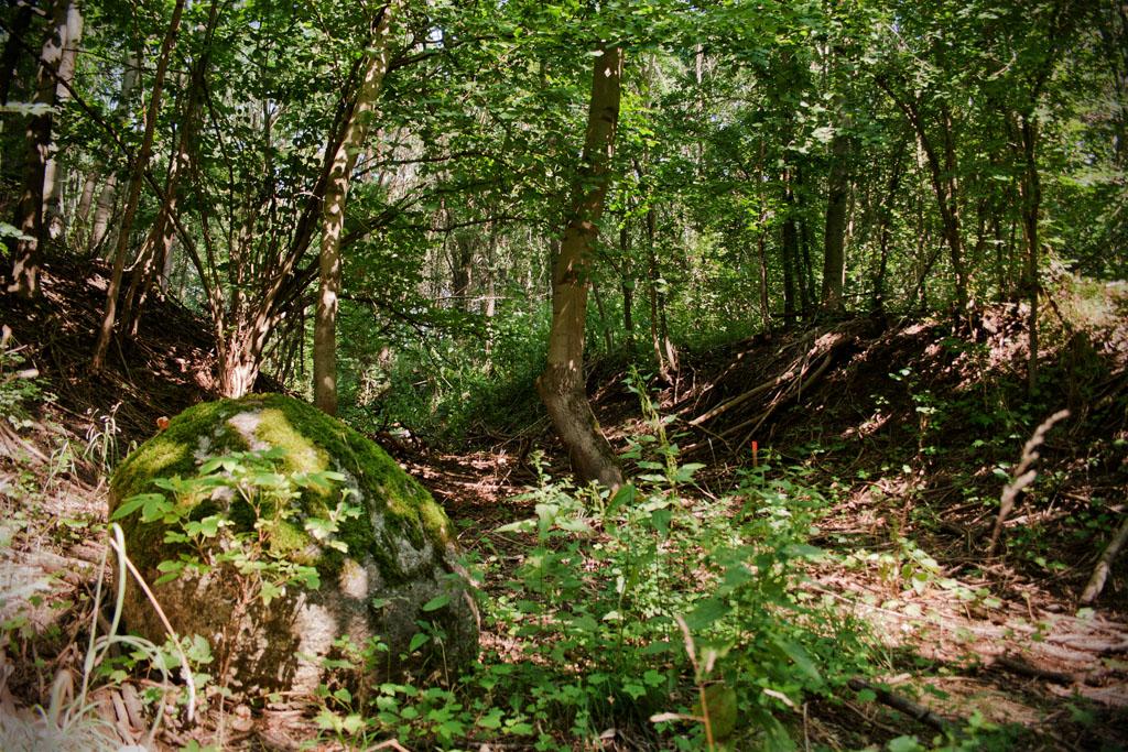 Von hier aus ist der Burgwall deutlich zu erkennen und er hebt sich von der Umgebung ab.