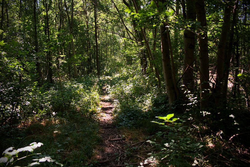 Der Pfad führt weiter durch die Bäume hindurch.
