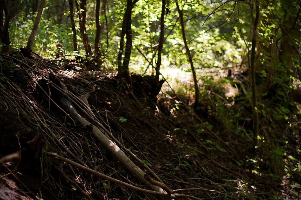 Neben dem Trampelpfad geht es einen Hang hinunter in einen Graben.