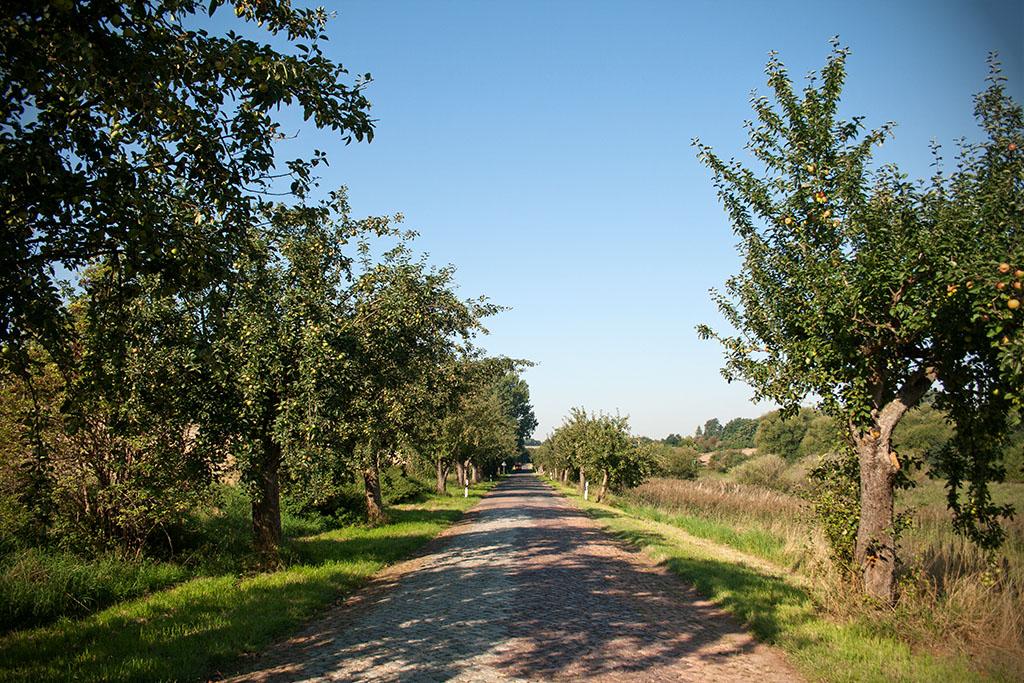 Die Straße von Krosigk nach Merbitz führt entlang der Apfelbaumallee zum alten Standort des Frößnitzsteins.
