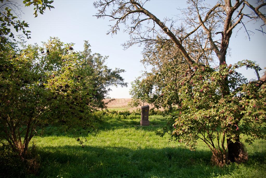 Rund um den Stein wachsen Birnbäume und Holunderbüsche.
