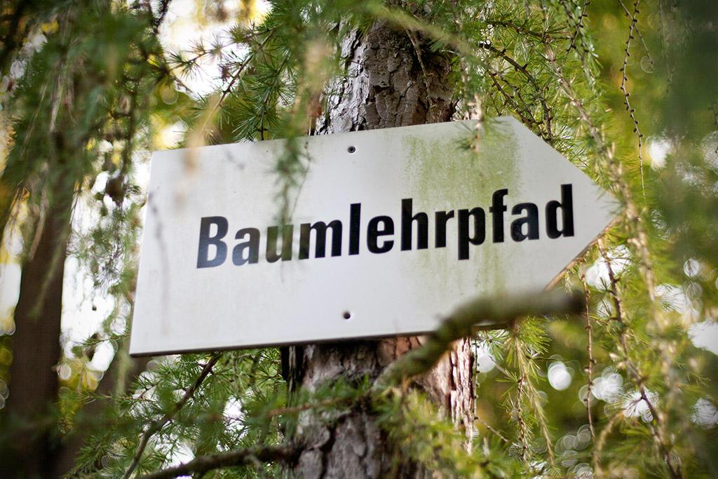Neben dem Stein bietet auch ein Baumlehrpfad im Kurpark lehrreiche Unterhaltung.